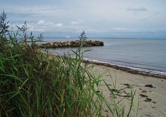 Seegras am Ufer